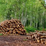 Lot-clearing-wood-pile