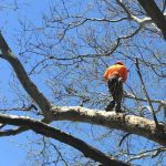 Tree Trimming Rockford IL