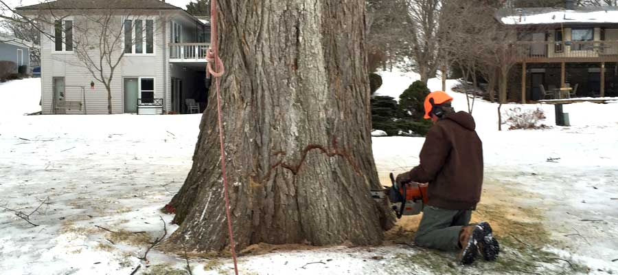 Tree Removal by Mark's Tree Care